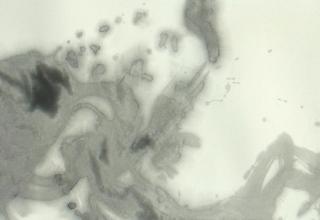 橘京身「爽气」 和画仙・墨 30.4×60.7㎝