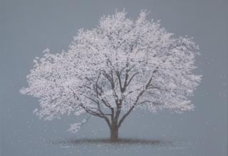 阪本トクロウ 「桜」 41×41cm アクリル・岩絵の具/高知麻紙