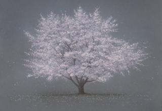 阪本トクロウ 「桜」 30×30cm