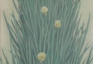 中西和「葱畑」洗い出し  60×40cm