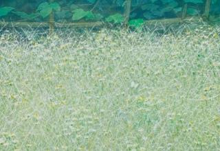 中西 和 「藩校の庭」 洗い出し 45×45