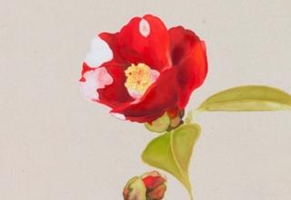 岩田壮平「都波喜」紙本彩色 33×18.8cm