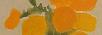 カトラン「黄色い花」 リトグラフ