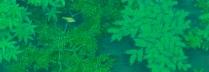 中西和 「緑蔭」 40×70cm