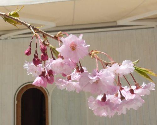 ギャラリー桜の木軽井沢