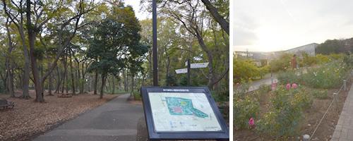 左:神代植物公園入口 右:バラ園で