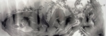 橘京身 「きざし」 墨・和画仙 70×135cm