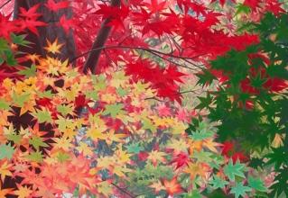 佐々木理恵子 「錦秋 Ⅰ」 日本画30号