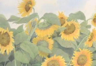中西和 「向日葵」 洗い出し 92×50