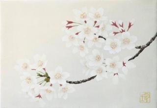 「さくら」日本画SM