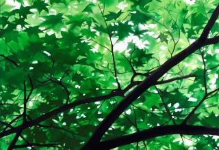佐々木理恵子「木漏れ日Ⅰ」岩絵具・水干/麻紙  72.7×72.7㎝