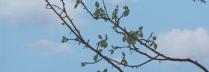 「草木」アクリル  53×45.5cm