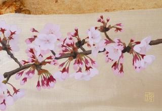 佐々木理恵子 「初桜」 日本画 27.5×60cm