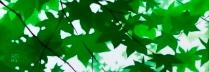 「木漏れ日Ⅳ」日本画 40.9×40.9cm