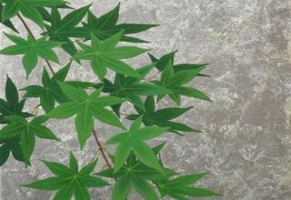 佐々木理恵子「緑そよいで」日本画 53×33.3cm