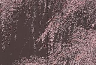 千住博 「月下の夜桜」 日本画 H72.7xW181.9cm
