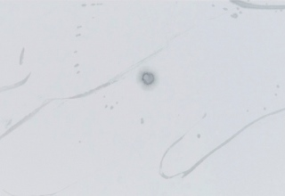 橘京身「音なひ」墨/亀紋宣 34×127.5㎝