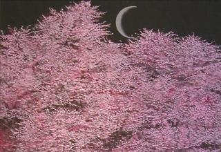 「桜花讃讃」日本画10号